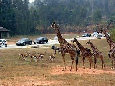 Xiangjiang Safari Park