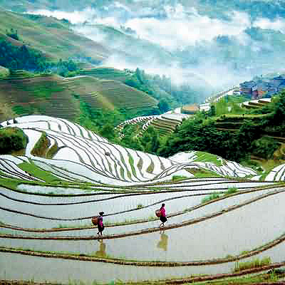 Longji Dragon's Backbone Rice Terraces