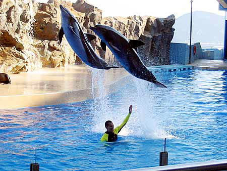 Dolphin Shows at Ocean Theatre