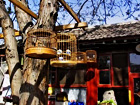 Hutong tour in rickshaw