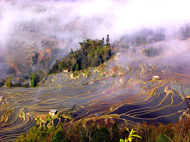 yuanyang terraces in mist