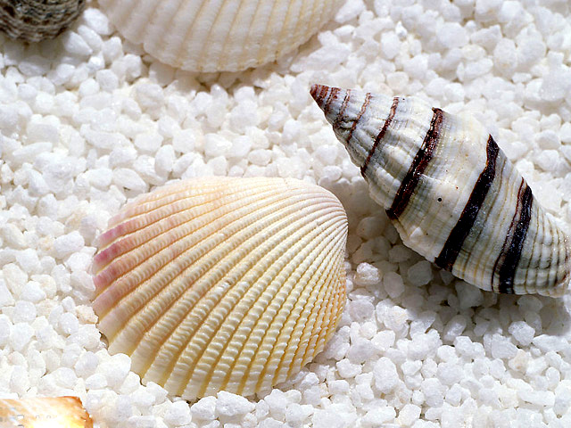 Wenchang Chicken