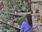 Suzhou Flower and Bird Market