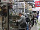 Crickets sold at Suzhou Bird and Flower Market